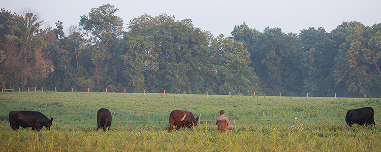mirror-image-farms-cattle-grass-feed